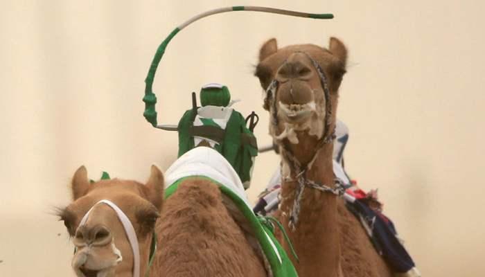 Dubai deve yarışları robot